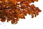 6th Oct 2014 - Vibrant
