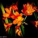 Glowing in the llight by flyrobin