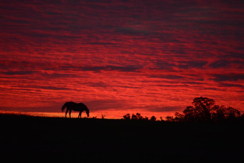 Horse on Heaven's Hillside by kareenking