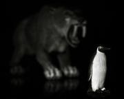 7th Oct 2014 - prowling; stalking prey - flightless waterfowl doomed