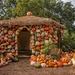 Pumpkin Village by lynne5477