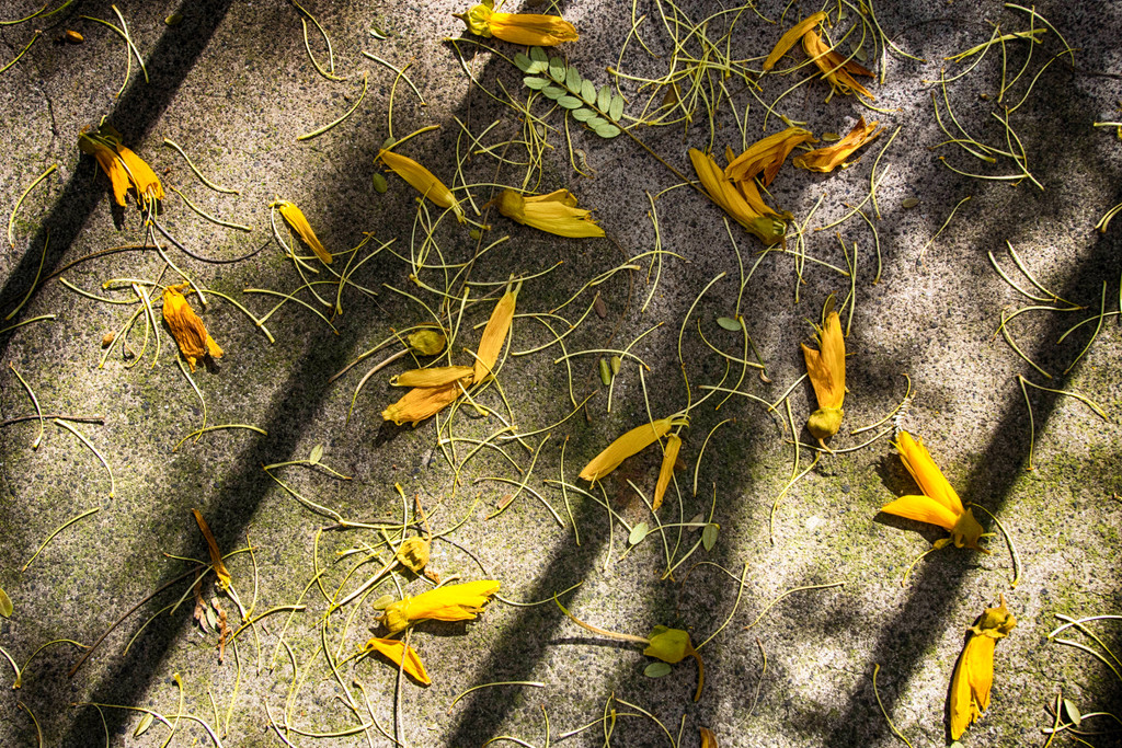 Shadows, light, Texture by ethelperry