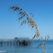 I love walks on the beach by flyrobin