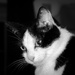 Flash cat - 9-10 by barrowlane