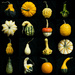 Look at all my Gourds by kwind