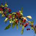 Berries (SOOC) by ukandie1