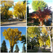 The Trees Are alive With Beautiful Colours by bkbinthecity