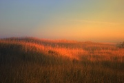 9th Oct 2014 - Dunes