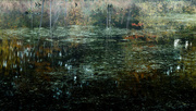 11th Oct 2014 - murky depths
