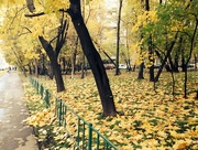 11th Oct 2014 - Falling Leaves