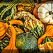 Gourds of All Shapes and Colors