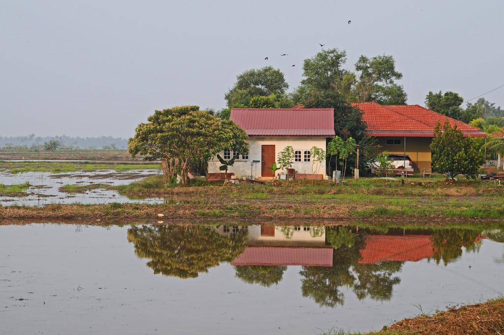 Homestead Perak by ianjb21