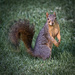 Got Nuts? by mikegifford
