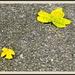 Arrangement in Yellow