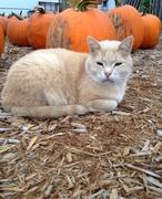 13th Oct 2014 - Pumpkin Among the Pumpkins
