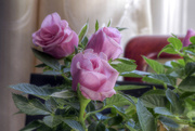 13th Oct 2014 - Opera and Roses