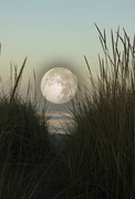 12th Oct 2014 - Moon over Klipsan Beach