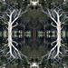 pattern trees by sugarmuser
