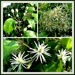 From buds to seed heads !  by beryl