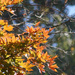 Autumn leaves with bokeh