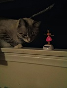 13th Oct 2014 - My cat likes the hula dancer