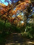15th Oct 2014 - Autumn Path