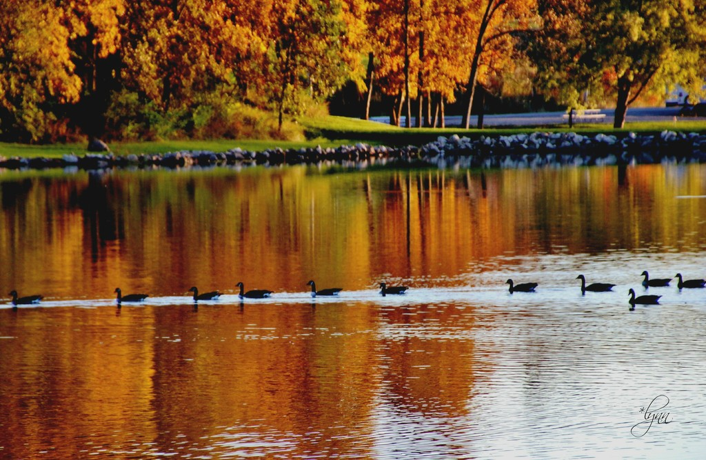 Autumn Alignment by lynnz