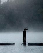 15th Oct 2014 - heron