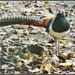 Do you like my pretty feathers? by rosiekind