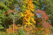 17th Oct 2014 - Fall 2014 in Richland