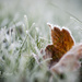 Moring Frost by ragnhildmorland