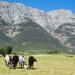 4 Horses by salza