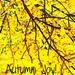 ETSOOI Autumn