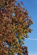 18th Oct 2014 - Autumnal Colours