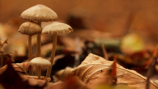 Mushrooms and Leaves by leonbuys83