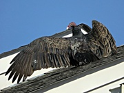 19th Oct 2014 - I'm King of the Roof