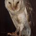 Owl by gosia