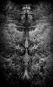 20th Oct 2014 - Moth