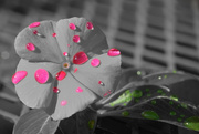 20th Oct 2014 - (Day 249) - Pink and Green Droplets