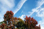 20th Oct 2014 - Pretty Autumn
