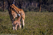 21st Oct 2014 - Mother and child