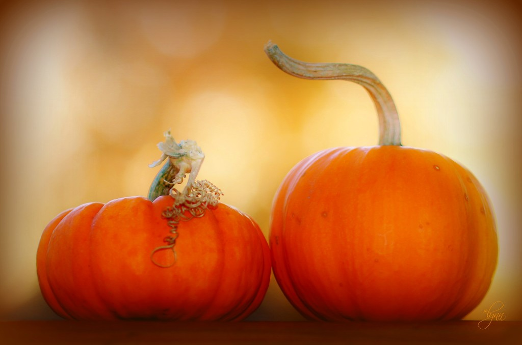 What Kind of Romances Do Pumpkins Have? Mushy! by lynnz