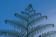 14th Oct 2014 - Fern