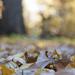 Autumn Sparkle