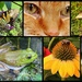 Up close with plants and animals! by homeschoolmom