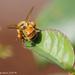 It ain't heavy, it's my pollen by flyrobin