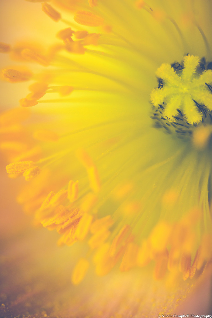 Pollen Explosion  by nicolecampbell