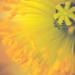 Pollen Explosion