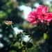 Office Garden by linnypinny