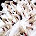 23rd October 2014 - Beaky by pamknowler
